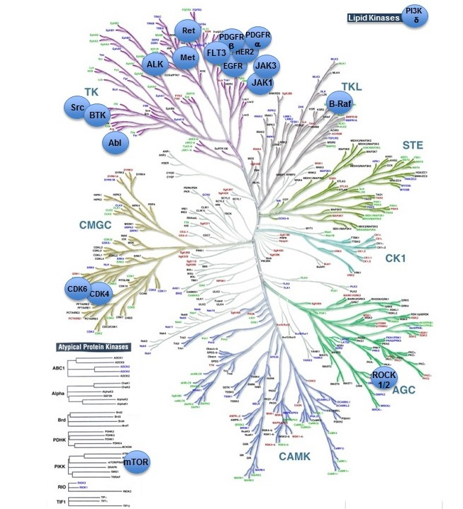 Mitogen-activated protein kinases (MAP kinases) | Enzymes | IUPHAR/BPS  Guide to PHARMACOLOGY