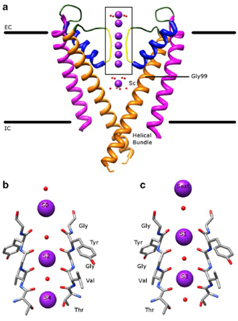 Voltage-gated potassium channels | Introduction | BPS/IUPHAR Guide